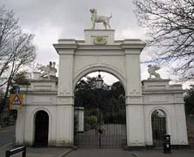 Picture of epsom-Dog-Gate